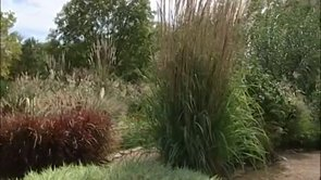 The Ornamental Grasses Garden